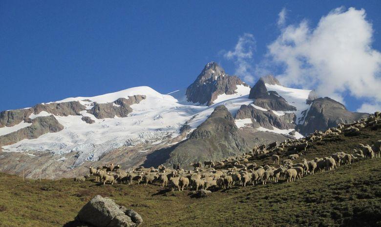 Tour du Mont-Blanc Intégral - sans sac-1