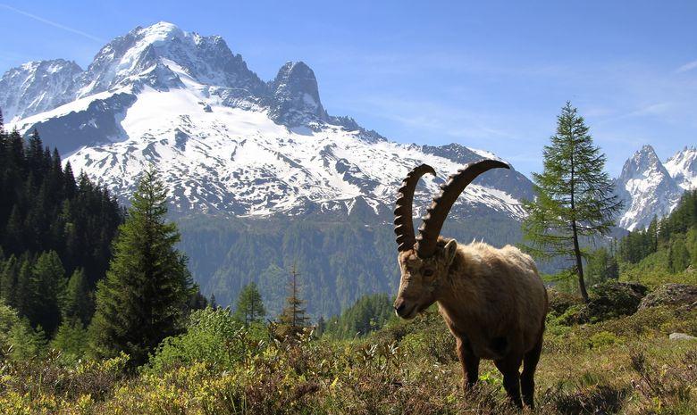 Tour du Mont-Blanc par les hauts-9
