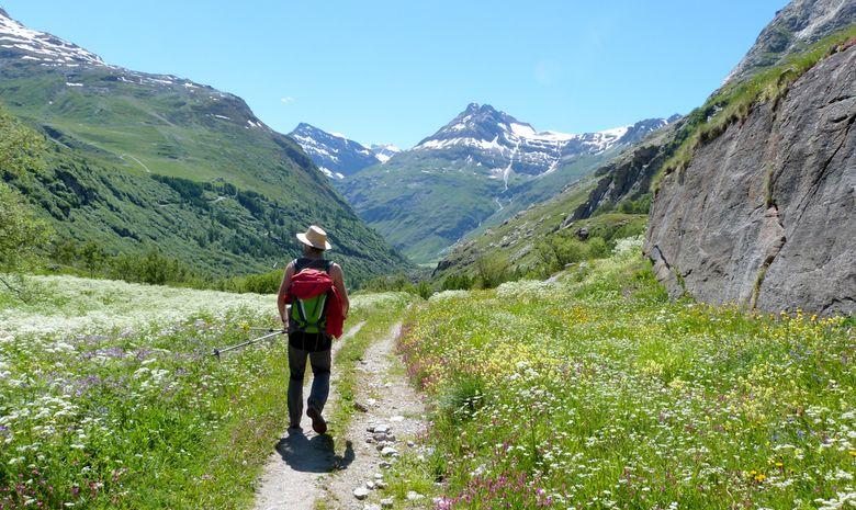 Randonneur entouré d'un champ de fleurs en Vanoise