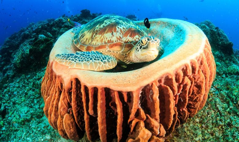 Croisière plongée dans l'archipel des Raja Ampat-5