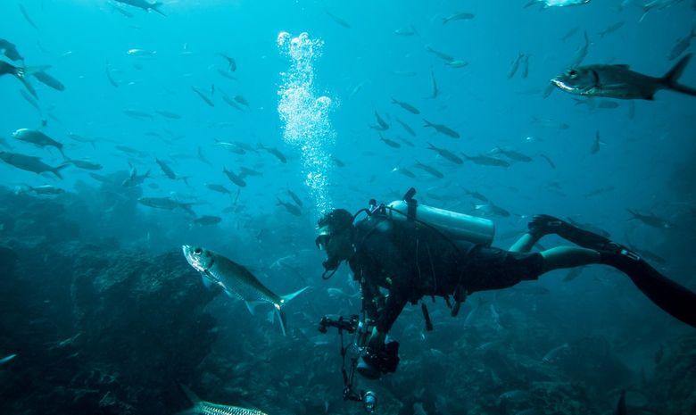Croisière plongée dans l'archipel des Raja Ampat-7