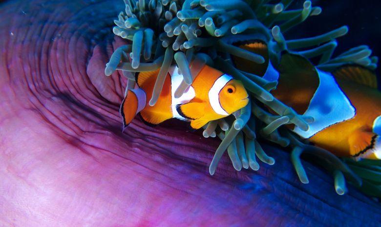 Croisière plongée à l'Île de Komodo (arrivée Bali)-1