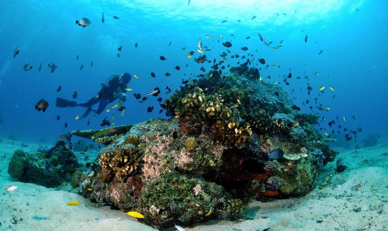 Croisière plongée à l'Île de Komodo (arrivée Bali)-11