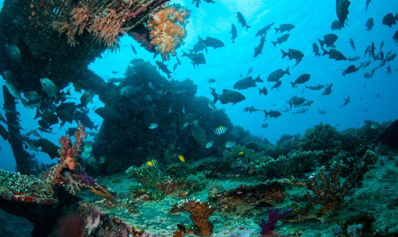 Croisière plongée à l'Île de Komodo (arrivée Bali)-12