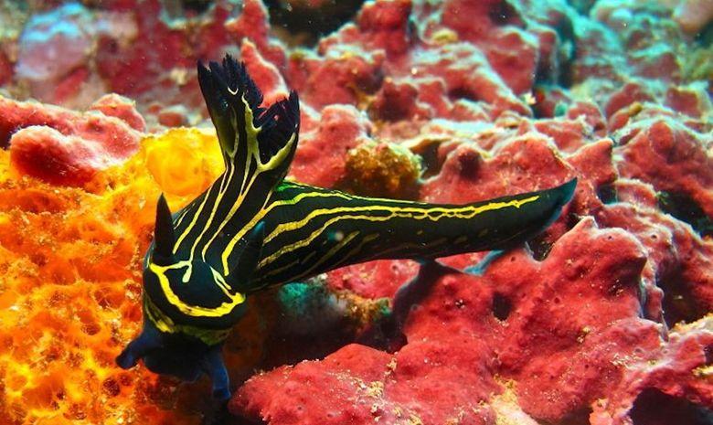 Croisière plongée dans l'Archipel de Maluku-7