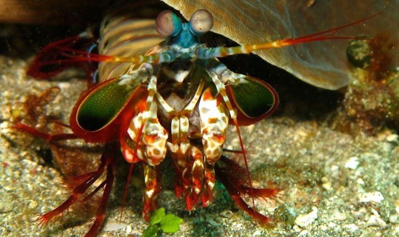 Croisière plongée dans l'Archipel de Maluku-11