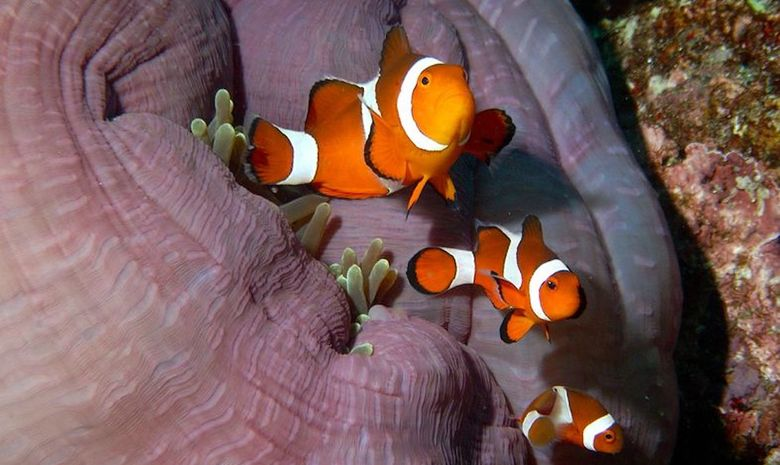 Croisière plongée dans l'Archipel de Maluku-12