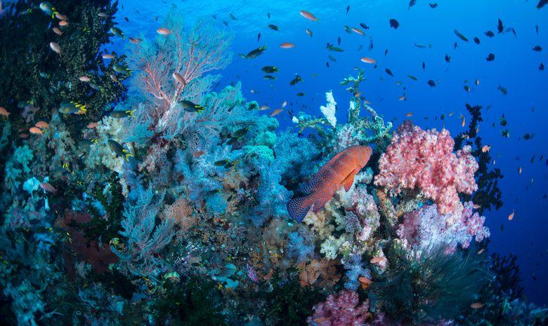 Croisière plongée dans l'Archipel de Maluku-14
