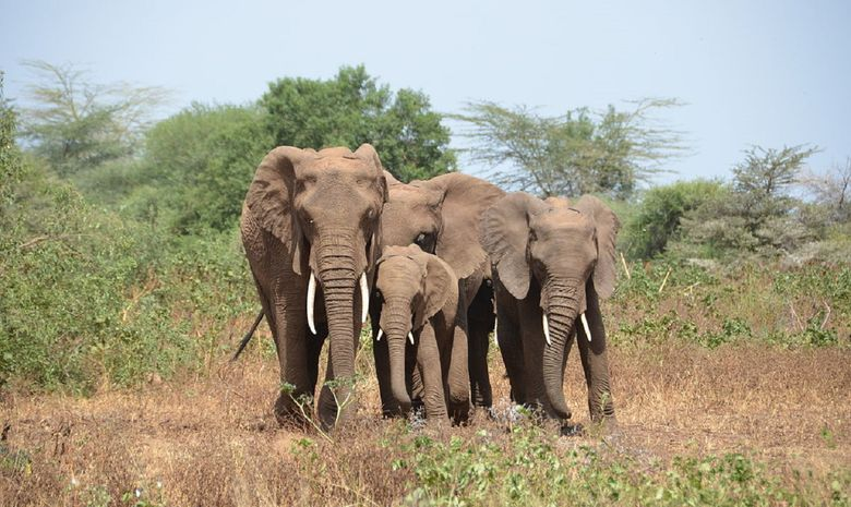 Les merveilles du nord de la Tanzanie en Safari-7