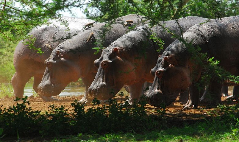 Les merveilles du nord de la Tanzanie en Safari-10