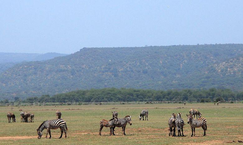 Les merveilles du nord de la Tanzanie en Safari-13