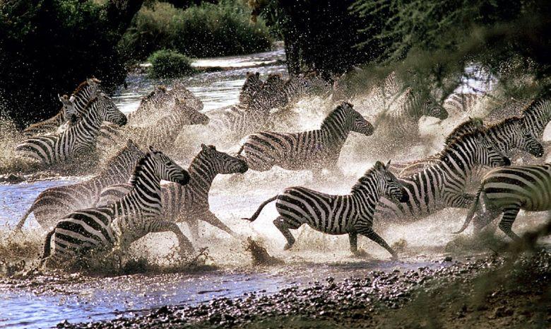 Safari au cœur des plus beaux parcs de Tanzanie-14