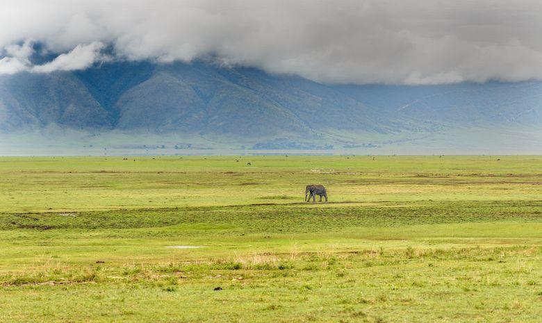 Safari au cœur des plus beaux parcs de Tanzanie-5