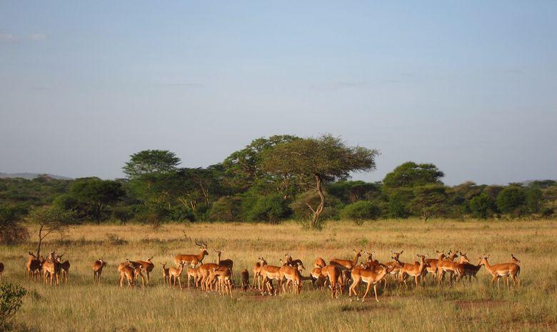 Safari au cœur des plus beaux parcs de Tanzanie-2