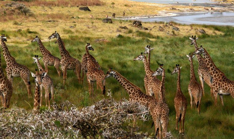 Safari au cœur des plus beaux parcs de Tanzanie-7