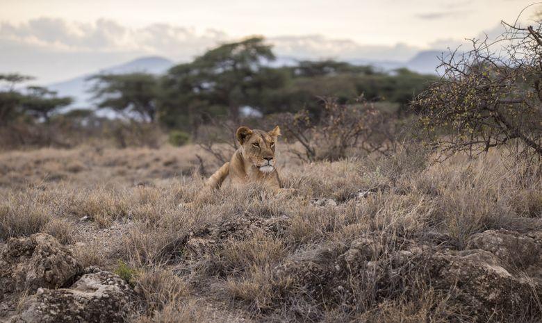 Safari au cœur des plus beaux parcs de Tanzanie-8