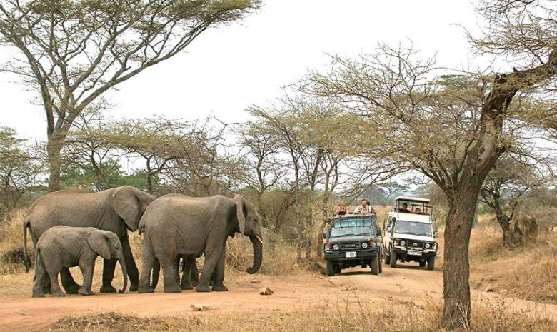 Safari au cœur des plus beaux parcs de Tanzanie-10