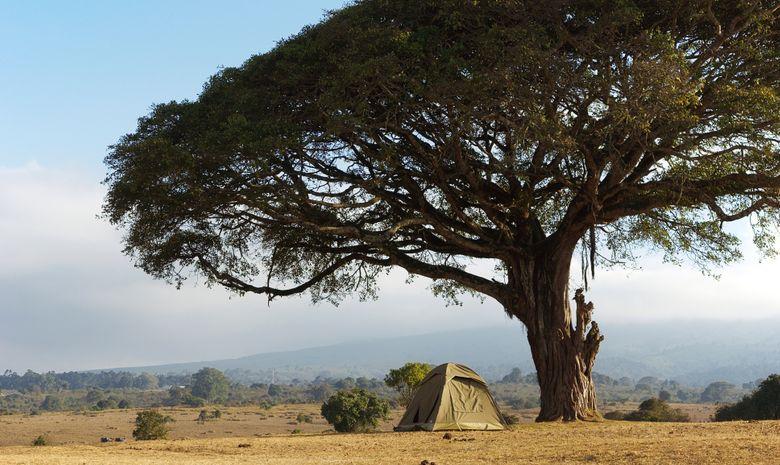 Safari en bivouac à travers les Grands Parcs