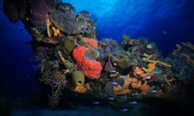 Croisière plongée dans la Péninsule du Yucatán-4