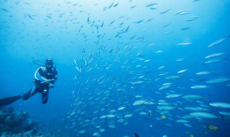 Croisière plongée Sud - Spécial Requins-baleines-2