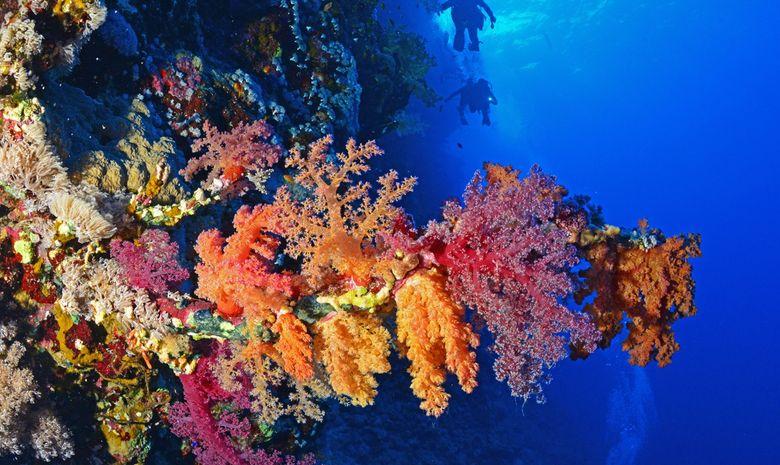 Croisière plongée au célèbre Saint John's Reef -5