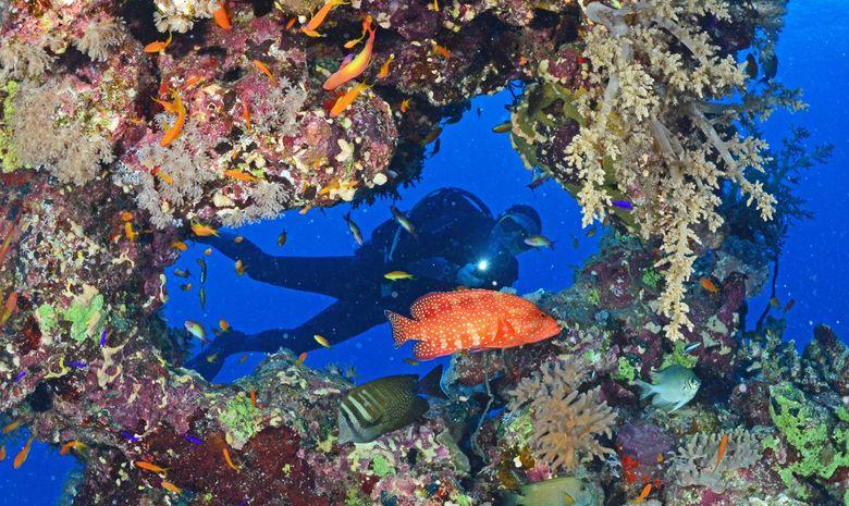 Croisière plongée au célèbre Saint John's Reef -3