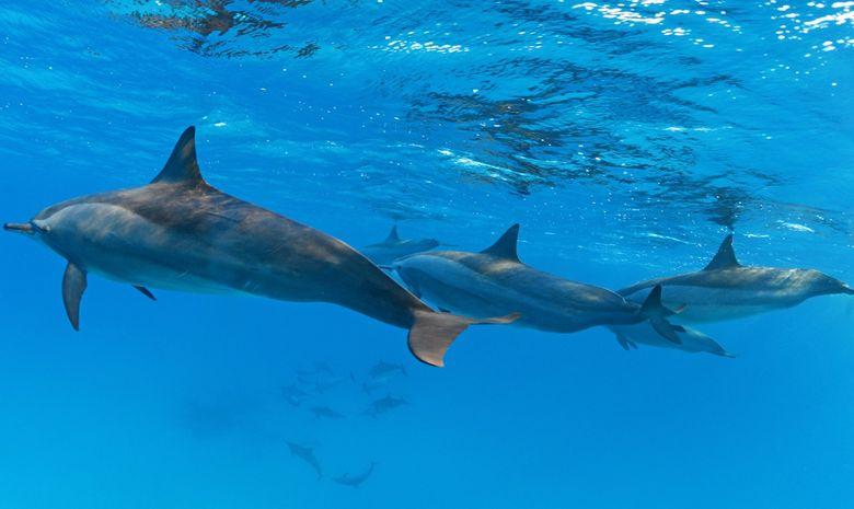 Croisière plongée au célèbre Saint John's Reef -4