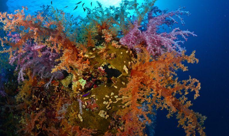Croisière plongée au célèbre Saint John's Reef -7