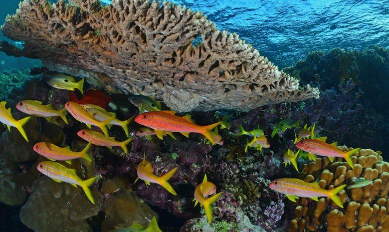 Croisière plongée au célèbre Saint John's Reef -6