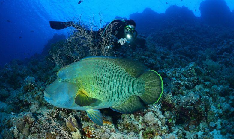 Croisière plongée au célèbre Saint John's Reef -8