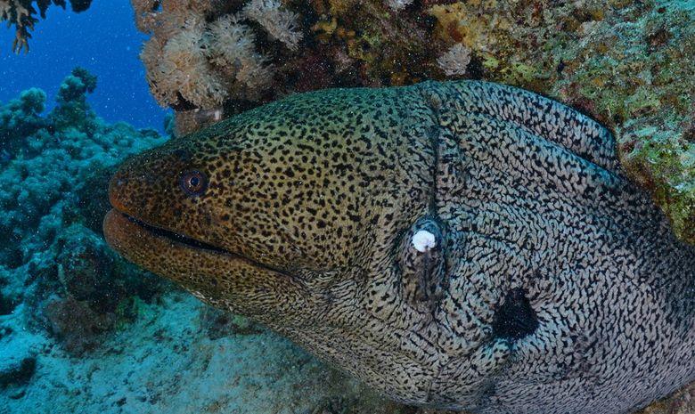 Croisière plongée au célèbre Saint John's Reef -9