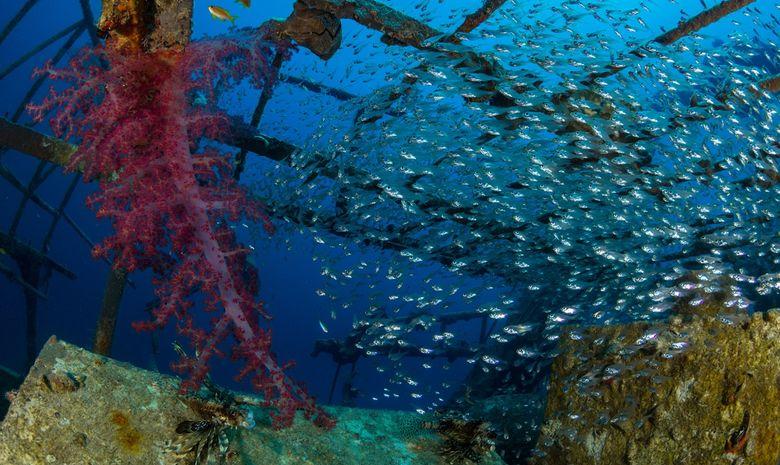 Croisière plongée épaves par Ras Mohammed-6
