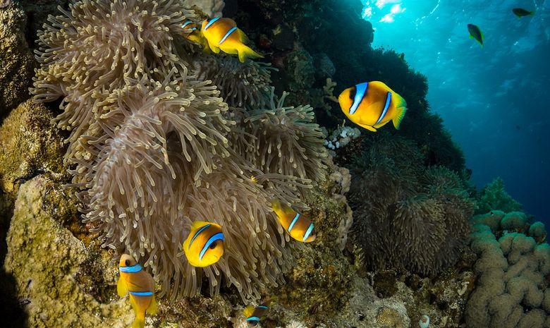 Croisière plongée épaves par Ras Mohammed-4