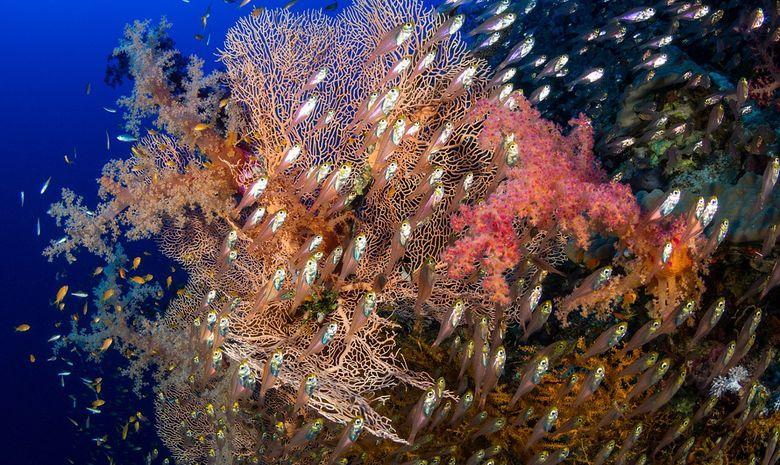 Croisière plongée épaves par Ras Mohammed-3