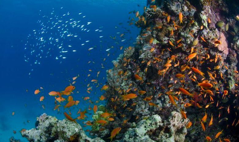 Croisière plongée découverte - Spécial Dauphins-6