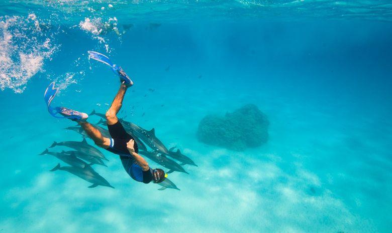 Croisière plongée découverte - Spécial Dauphins-2