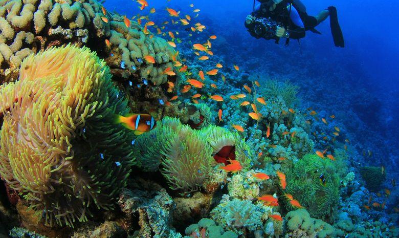 Croisière plongée découverte - Spécial Dauphins-3