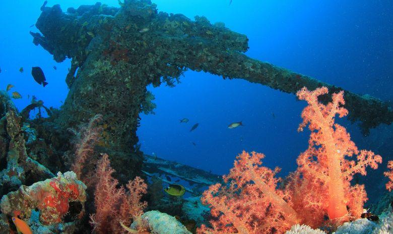Croisière plongée du nord de la Mer Rouge à Tiran-3
