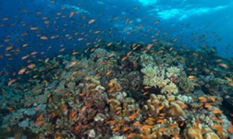 plongée itinérante par les îles Brothers-8