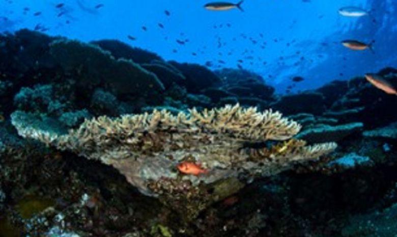 plongée itinérante par les îles Brothers-2