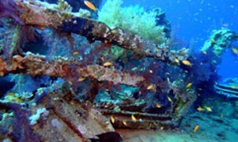 plongée itinérante par les îles Brothers-7