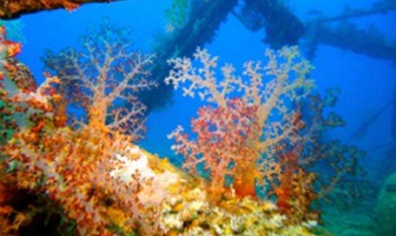 plongée itinérante par les îles Brothers-6
