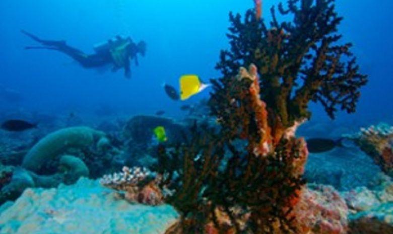 plongée Sud - Spécial Pélagiques-7