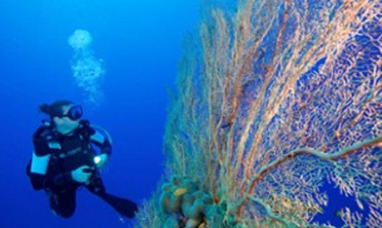 Croisière plongée Sud - Spécial Pélagiques-9