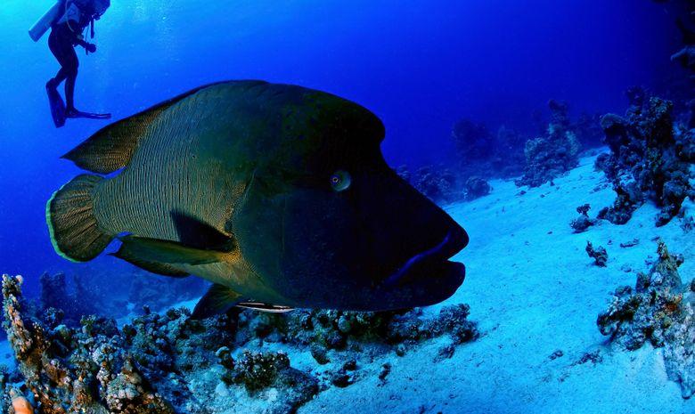 Croisière plongée Sud - Spécial Pélagiques-7