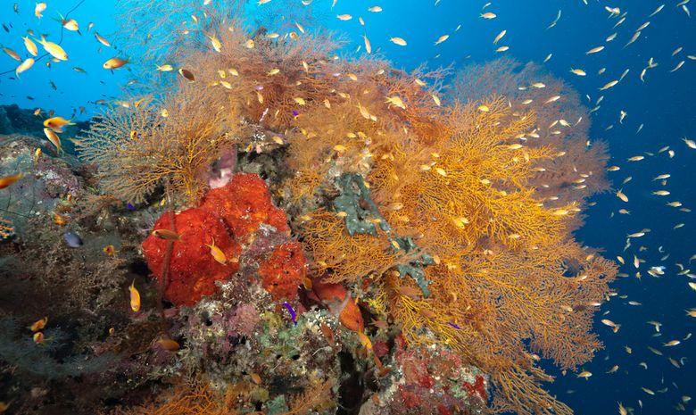 plongée découverte des sites de Suakin -2