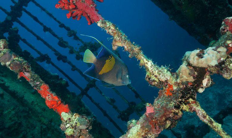 plongée découverte des sites de Suakin -12