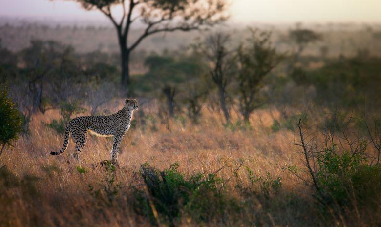 Safari expresse dans le Nord de la Tanzanie-1