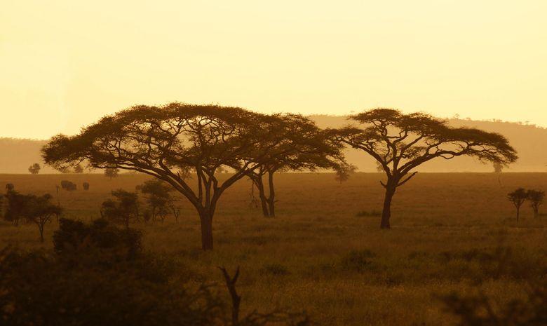 Le Serengeti au coucher de soleil