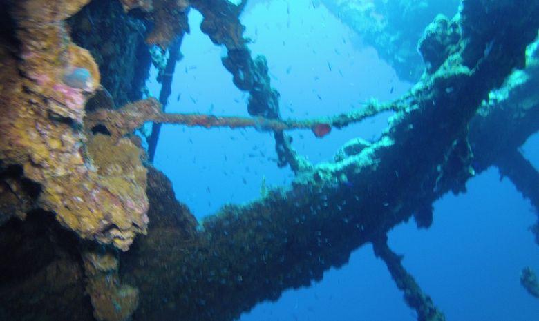 Croisière plongée découverte des pélagiques Nord-5